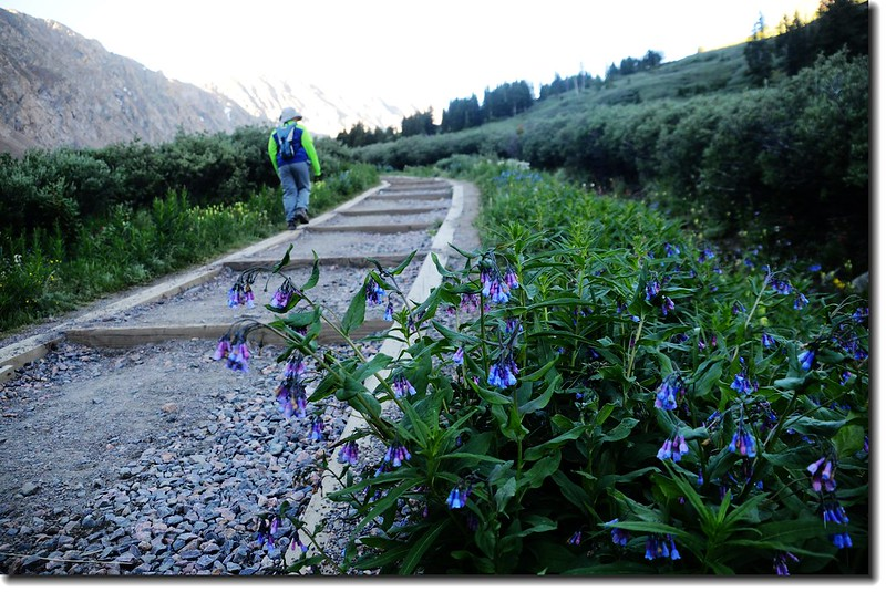 The Grays Peak trail is in great condition and easy to follow