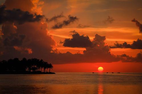 trees sunset orange sun glow unitedstates florida marathon palm