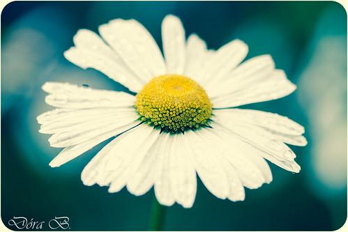 http://society6.com/product/nice-flower-svf_print#1=45