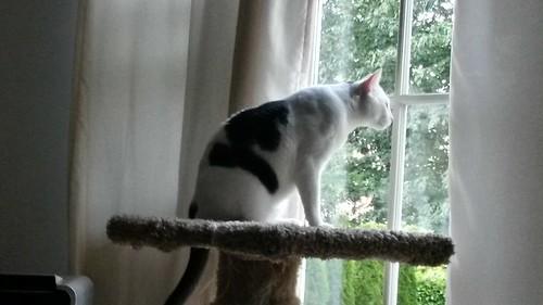 Surveying his new domain