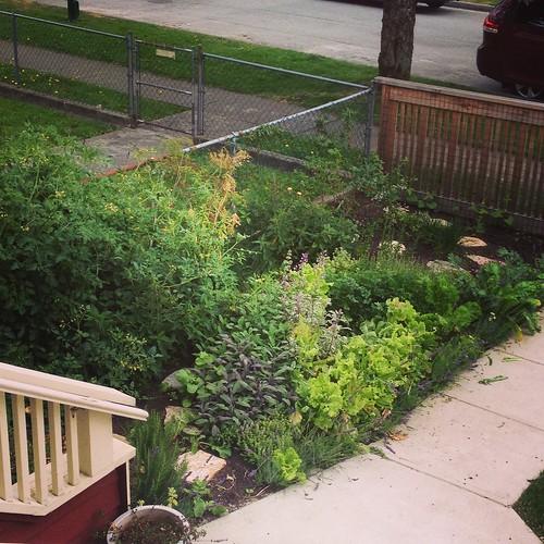 Garden - July