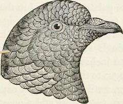 "Image from page 290 of ""A history of British birds, indigenous and migratory: including their organization, habits, and relations; remarks on classification and nomenclature; an account of the principal organs of birds, and observations relative to practi"
