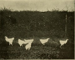 """Image from page 258 of """"Our domestic animals, their habits, intelligence and usefulness;"""" (1907)"""
