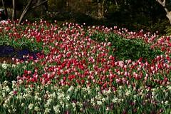 Dalls Blooms