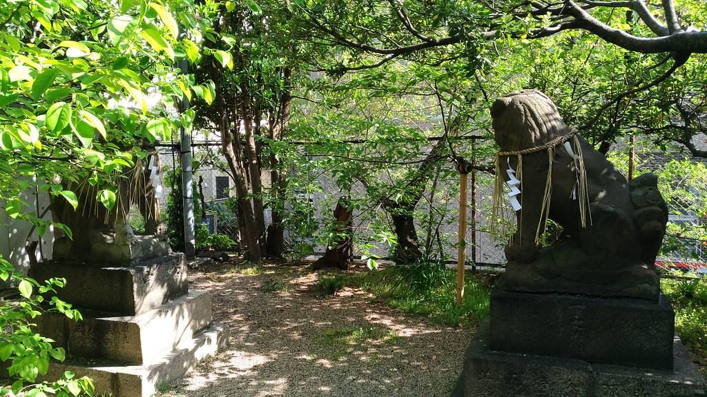 堀越神社 後ろ向きの狛犬