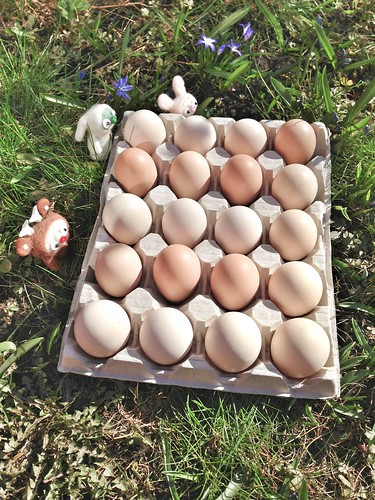 kind eggs inspection
