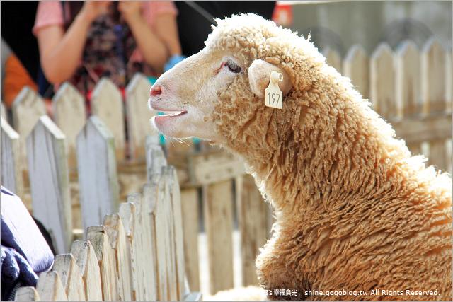【南投旅遊景點】暑假親子旅遊景點~清境農場青青草原《13遊記》