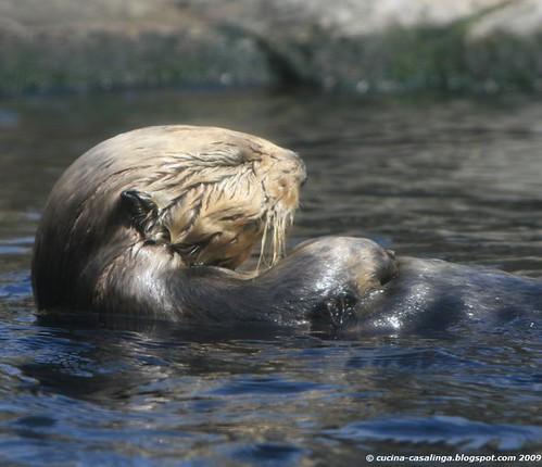 Otter schlafend klein copyr