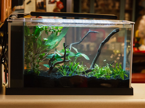 freshly planted low light fluval spec v aquarium
