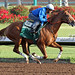 California Chrome's Penultimate Derby Workout