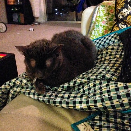 She really does love that quilt. Hasn't moved much since I got it out this afternoon. #catsofinstagram #russianblue #catsonquilts #dsq #ds