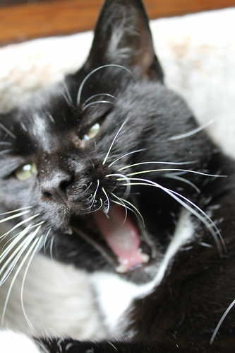 Murphy yawning