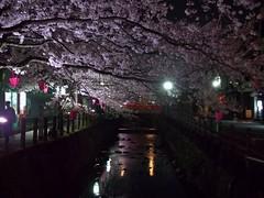 Nuit japonaise