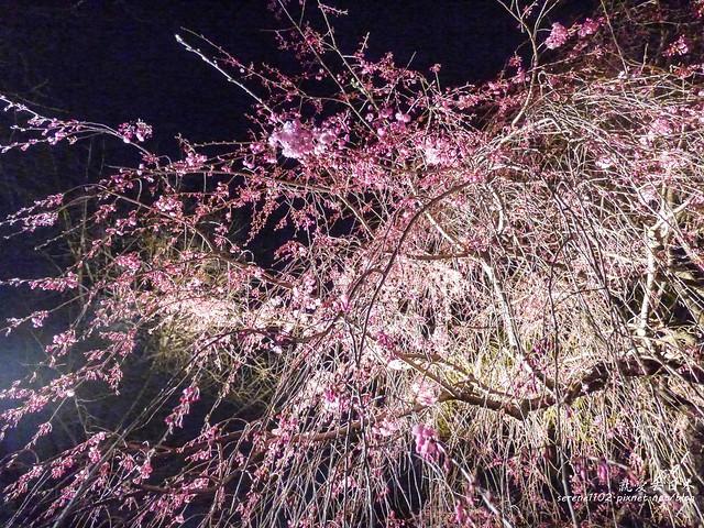 20140327山陽D2熊本-1130351