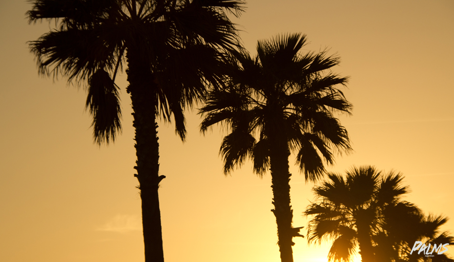 Venice Beach - Palms