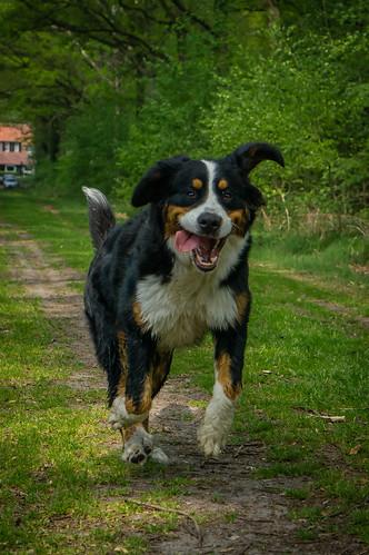 Floortje on the run