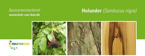 Holunder-Header