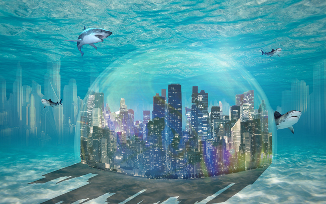 SharkTown1