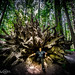 The king of the redwood forest on his throne by tibchris