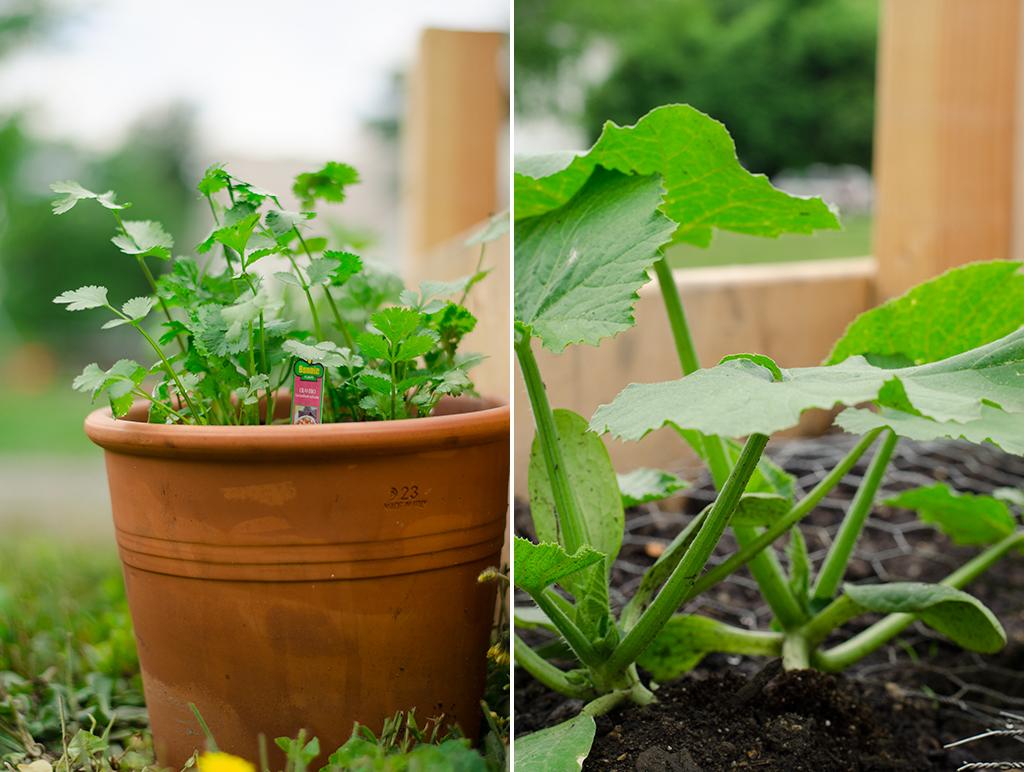 garden collage 2