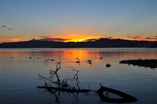 nature soleil rotorua coucher lac paysage cygne calme coucherdesoleil environnement sérénité nouvellezélande océanie