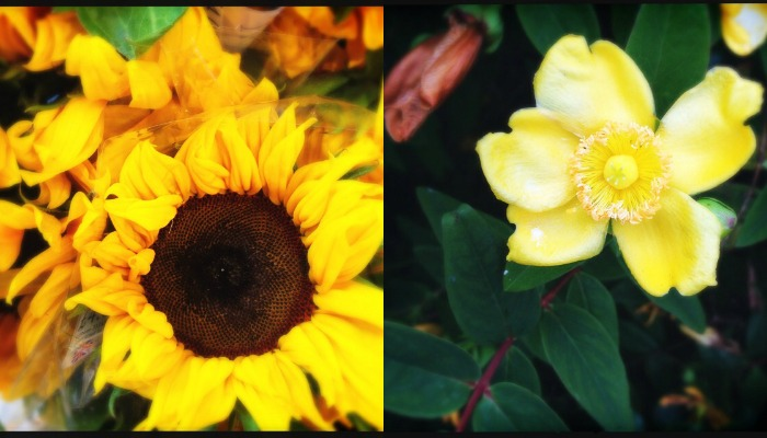 capturing-colour-yellow-flowers