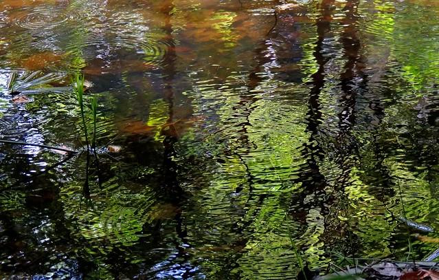 2014.05.17 Águas verdejantes