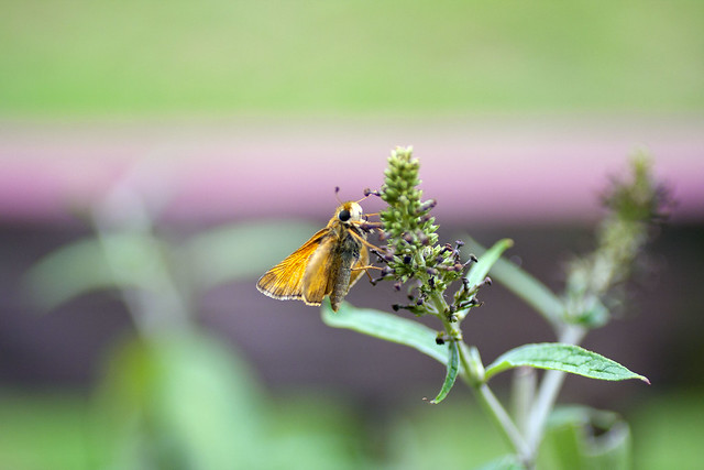 IMG_0946a