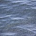 anchovies_8 by Scripps_Oceanography