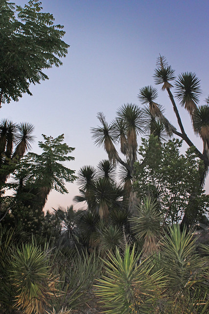 Balboa Native Garden