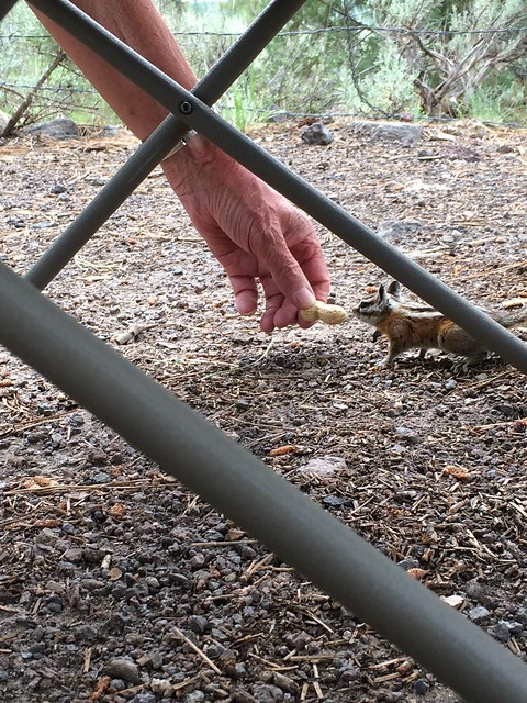 Dad feeding peanuts to chipmunks