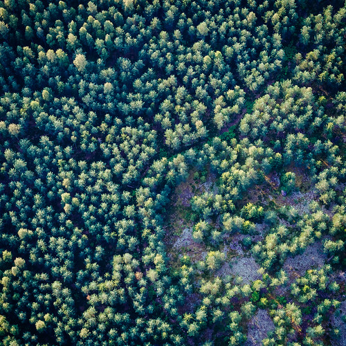 trees summer abstract nature forest finland landscape evening countryside europe olympus aerial hotairballoon omd mäntsälä em5 panasonic1235mmf28