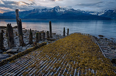 Remnants of a pier destroyed by a 1964 tsunami on the rocky shores of Resurrection Bay - Alaska
