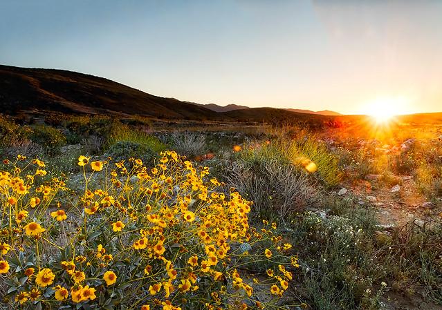 Anza-Borrego Wildflower Dawn