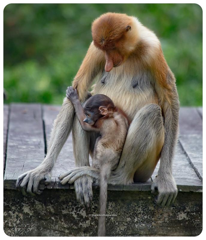 Borneo-20170413-_MG_8053