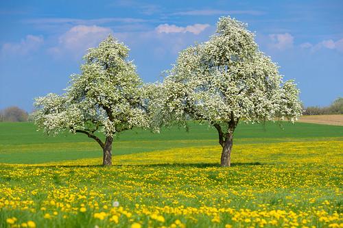 apple schweiz spring day cloudy thurgau