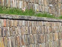 springtime stone wall