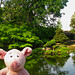Pig and Pond by pianoforte