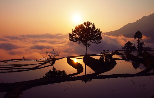 china field sunrise terrace yunnan landescape cina yuanyang