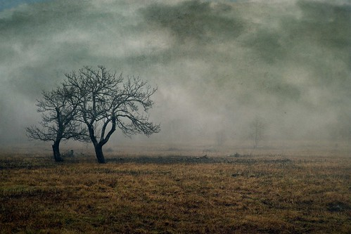 old morning trees storm abstract tree history texture abandoned nature field fog rural dark landscape photography evening mood branch moody open darkness artistic farm foreboding bare massachusetts branches foggy newengland surreal stormy orchard haunted spooky pasture photograph berkshires fields farms pastures past broad plain baretrees impressionist isolated textured stormclouds appleorchard appletrees expanse approachingstorm berkshirecounty approachingrain gatheringstorm