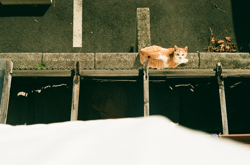 straycat [2nd Gen.]