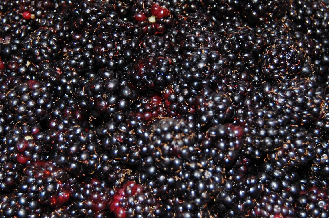 Blackberries@SeattleThrowback