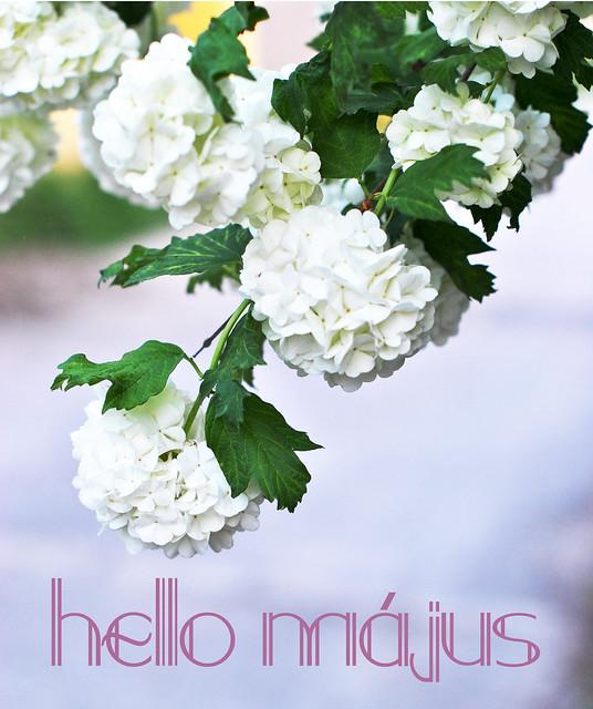 hello_majus2014