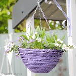 Spray painted hanging basket