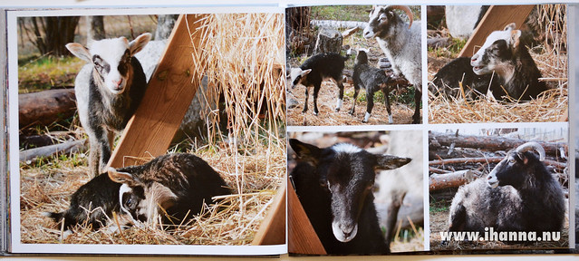 Hello Sheep - iHanna's Blurb Book Vyer fr�n Gotland