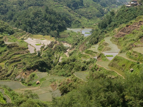 Banaue rice terraces 2