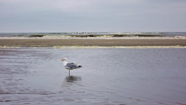 Goldengelchen Noordwijk aan Zee002