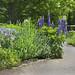 Small photo of Acton Arboretum
