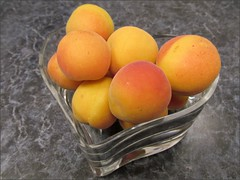 2nd Blenheim apricot harvest 6/6/14