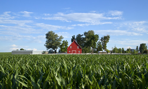 rural cornfield colorado farming co farms redbarns rurallife larimercounty larimercountyco
